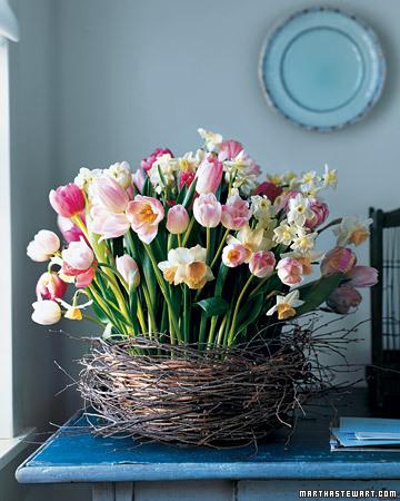 Mla103219_0408_birch_tulip_xl